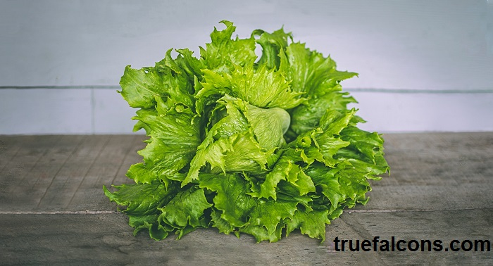 lettuce delicious diet food for healthy life